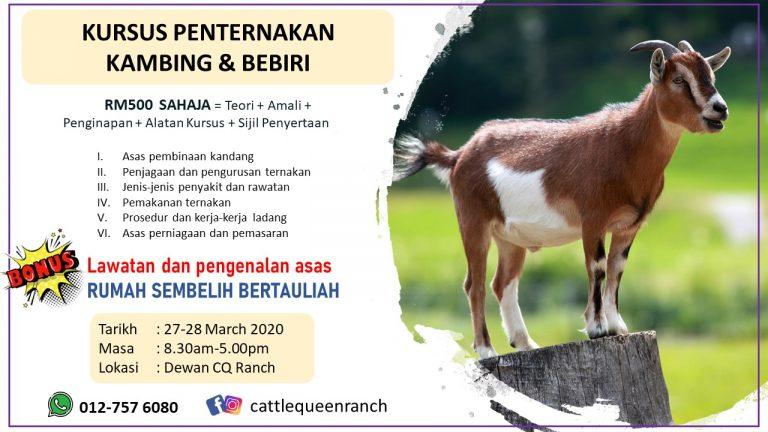 goat-sheep-training